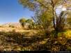 Panorama: meadow in desert