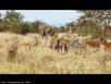 Savanna scene (2 of 3)