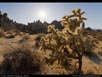 Panorama: Mojave Desert vegetation