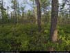 Panorama: pine barrens