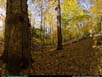 Panorama: old-growth hardwoods forest