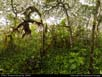 Panorama: Scalesia Forest