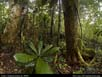 Panorama: tropical rainforest