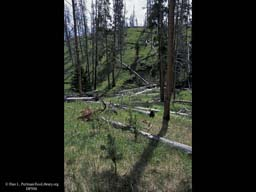 Disturbance: 12 years after Yellowstone fire