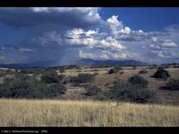 Grassland with rain, Arizona
