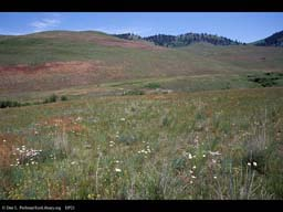 Grasslands, National Bison Range, Montana