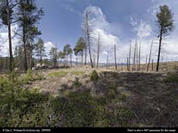 Panorama of Aftermath of a major forest fire in Colorado