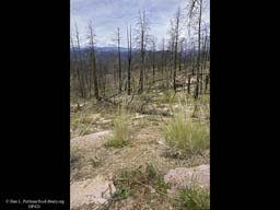 Succession four years after forest fire 2