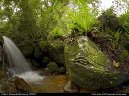 Panorama of Madagascar tropical rainforest stream