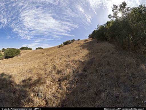 Panorama of Ecotone on serpentine soil in California