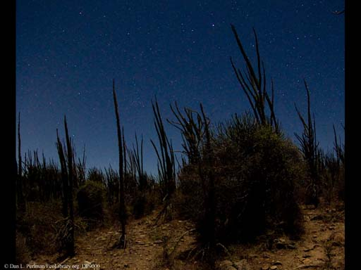 Panorama of Madagascar spiny desert at night