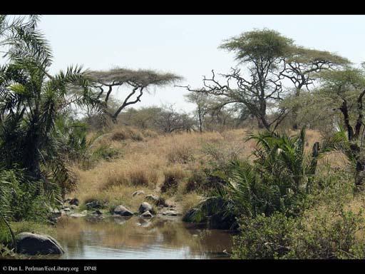 Riverside forest in savanna, Tanzania