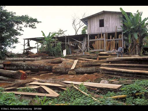 Sawmill by a nature preserve, Costa Rica